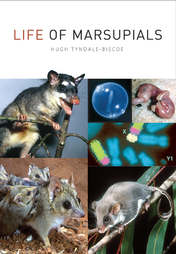 The cover image featuring three marsupial pictures with three smaller imag