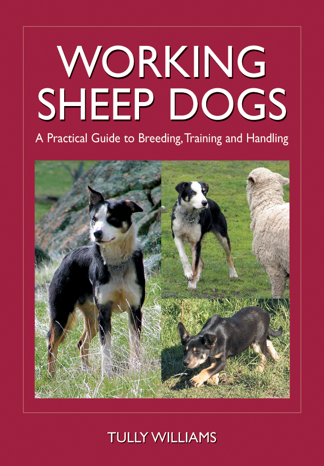 The cover image of Working Sheep Dogs, featuring three images of sheep dog