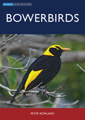 The cover image of Bowerbirds, featuring a black bird with a bright yellow