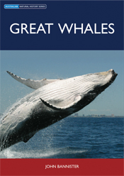 The cover image of Great Whales, featuring a large whale mid jump, with it