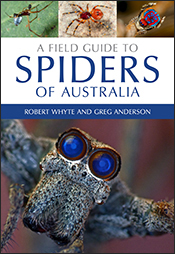 Field Guide to Spiders of Australia