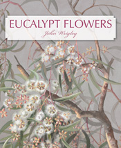 cover of Eucalypt Flowers